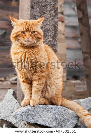 red angry cat sitting on the grey stones.Vertical image.