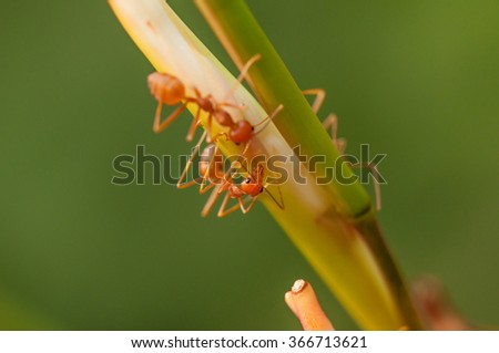 Red ant at work on green stalk in forest with blur background  - stock photo