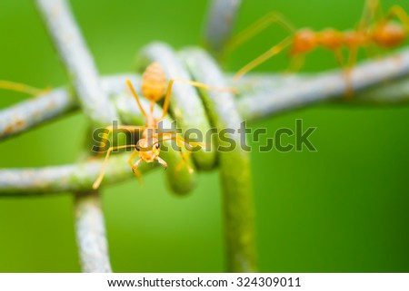 Red ant face on green blurred background,Macro shot. - stock photo