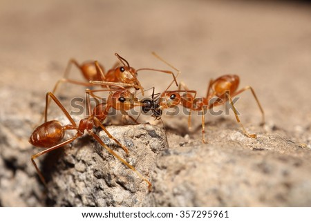 Red ant in the garden - stock photo
