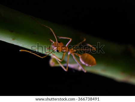 red ant on green plant - stock photo