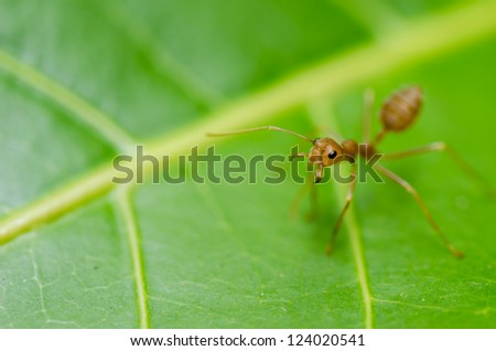 red ant on the leaf in the nature