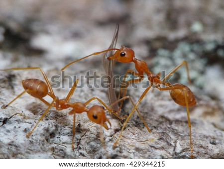 Red ant on working in green garden - stock photo