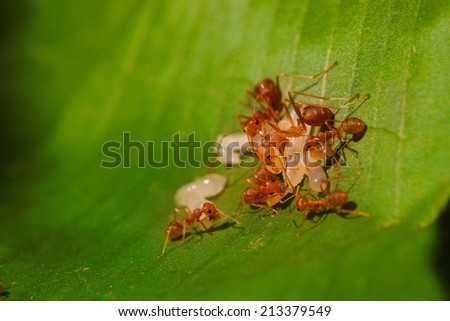 red ant teamwork in green nature - stock photo