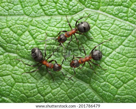 red ants connection with antennas - stock photo