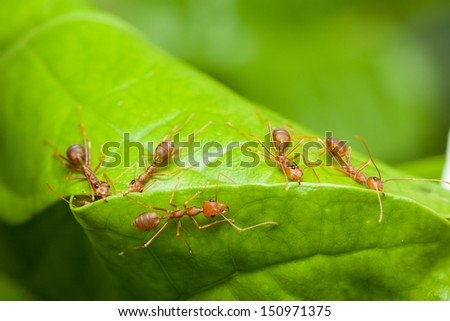 Red ants help together to build home or nest, teamwork concept - stock photo