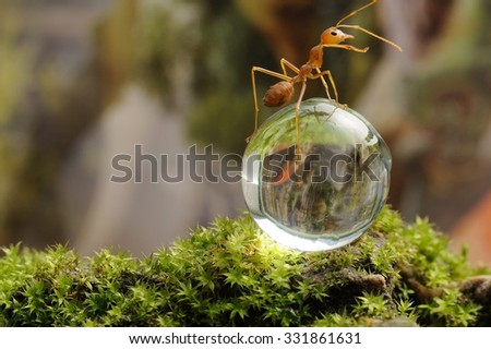 Red ants on crystal ball - stock photo