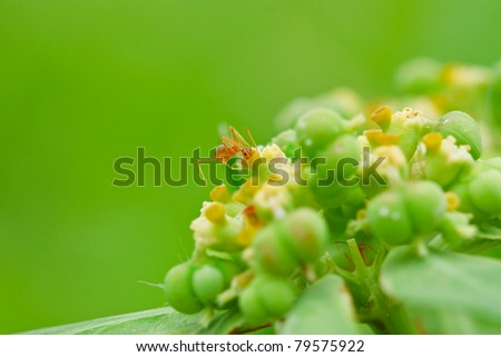 Red ants on the grass. - stock photo