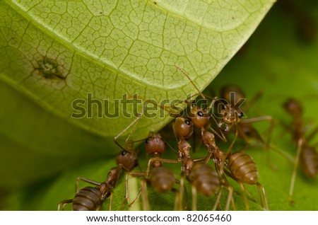 red ants team work