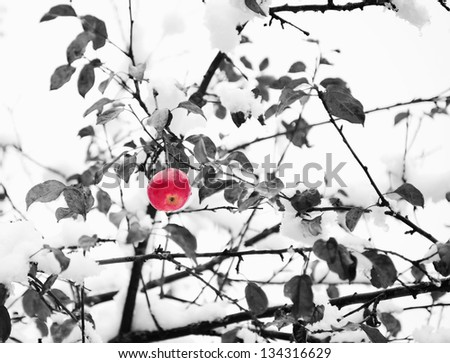 Red apple on a branch in the snow in winter - stock photo