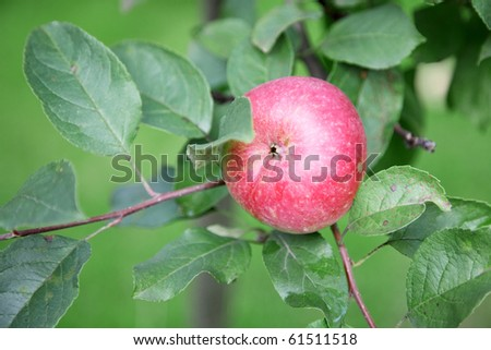 red apple on green brunch - stock photo