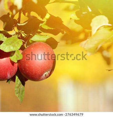 Red apple on tree - stock photo