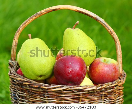 Red apples and green pears in the basket - Autumn at the rural garden. Close up with shallow DOF.