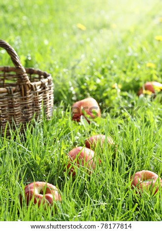Red apples in the grass and basket