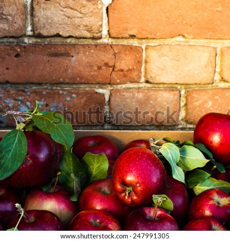 Red  Apples with green leaves on rustic old  background. Nature fruit concept. - stock photo