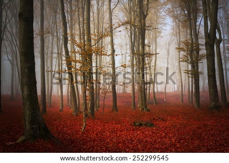 Red autumn forest - stock photo