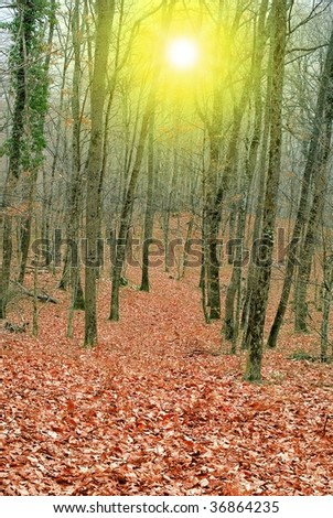 red autumn forest in a rays of sun - stock photo