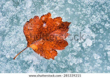 Red autumn leaf on the ice. Macro image with small depth of field - stock photo