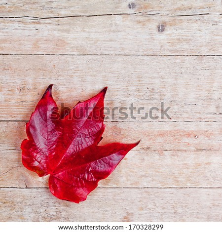 red autumn leaf on wooden background - stock photo