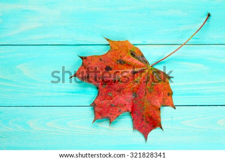 Red autumn leaf over blue wooden background with copy-space - stock photo