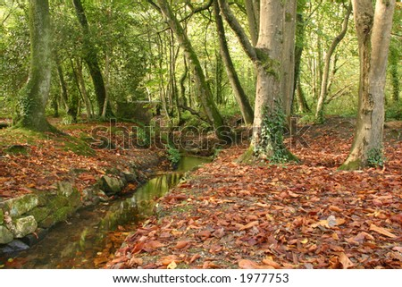 Red autumn leaves and a stream running through Tehidy Country Park, Cornwall, UK