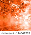 Red autumn leaves reflecting in the wate - stock photo