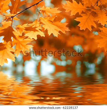 Red autumn leaves reflecting in the water - stock photo
