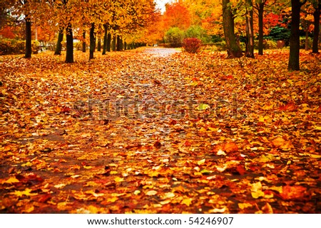 red autumn park - stock photo