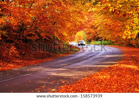 red autumn sunny road with blurred car in deep bulgarian forest  - stock photo