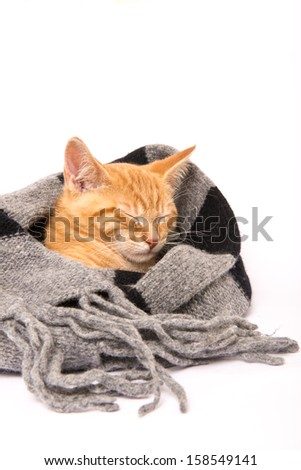 Red baby cat sleeping surrounded by a scarf - stock photo