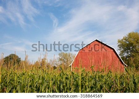 Red Barn Behind Tall Corn - A classic red barn sitting behind tall late-summer corn with a dramatic blue sky.  Ample copy space in the sky if needed. - stock photo