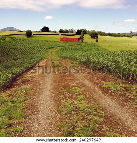 Red barn in corn field - stock photo