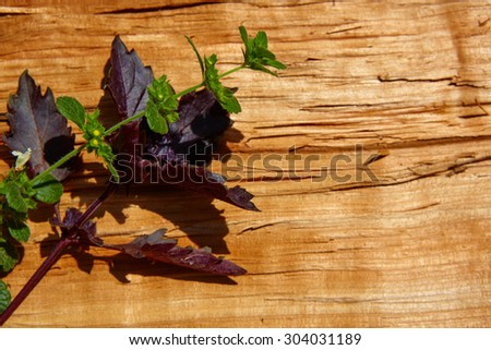 Red basil leaves on wooden background. Copy space. Shallow dof - stock photo