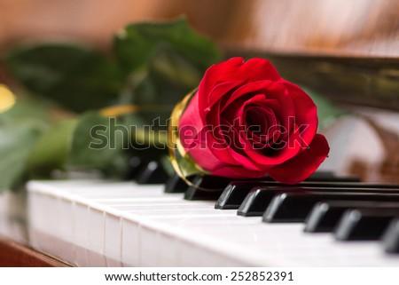 Red beautiful rose on piano keyboard. Music background - stock photo