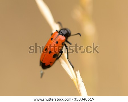 Red beetle on nature. close - stock photo