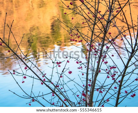Red Berries next to the River; blue Background during Winter