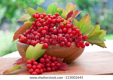 Red berries of viburnum in wooden bowl - stock photo