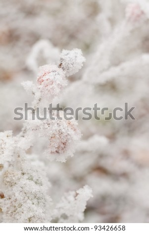Red berries on the branch frozen under snow - stock photo
