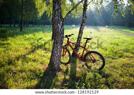 Red bike standing near a birch trunk on a spring sunny park. Travelling by bicycle and a healthy lifestyle - stock photo