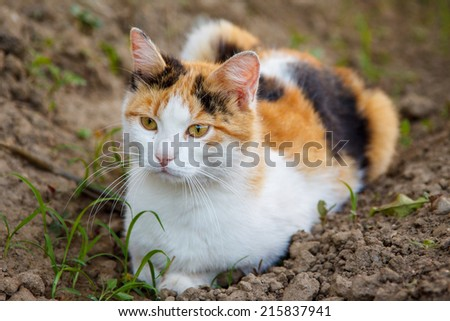 Red, black and white cat sitting on the ground - stock photo