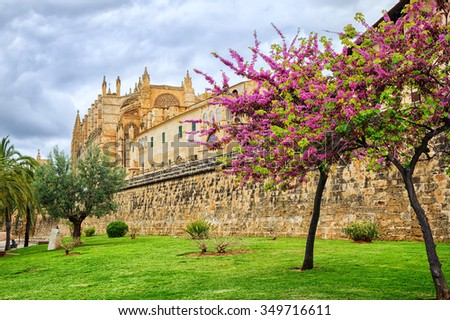 Red blooming cherry tree in front of La Seu, the cathedral of Palma de Mallorca, Spain