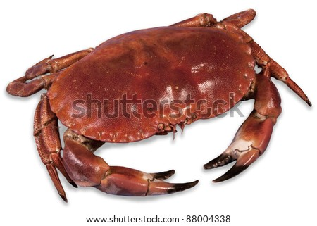 red boiled crab - stock photo