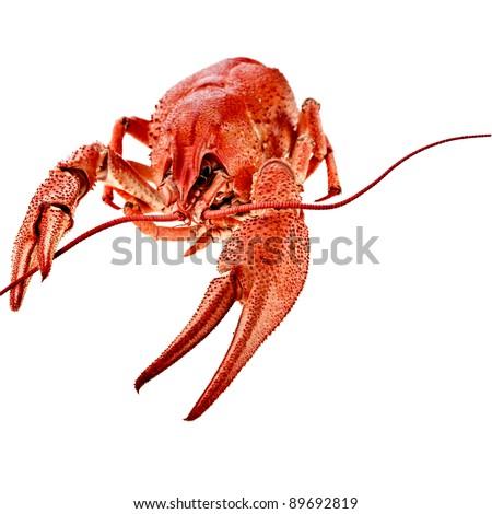 red boiled crawfish on white background - stock photo