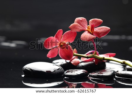Red branch orchid and black stones with reflection - stock photo