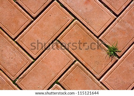red bricks background with a small  bunch of green grass