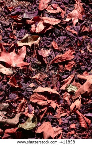 Red & Brown Leaves - stock photo