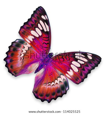 Red Butterfly flying - stock photo