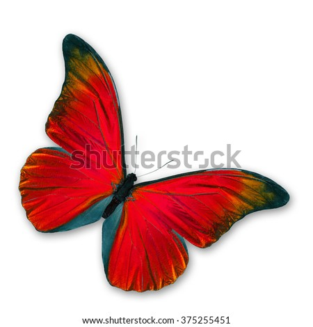 Red Butterfly flying, isolated on white background - stock photo