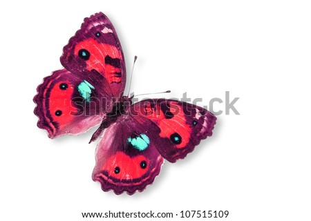 Red Butterfly Isolated on white. - stock photo