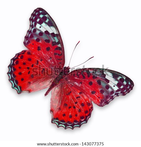 Red butterfly isolated on white background
